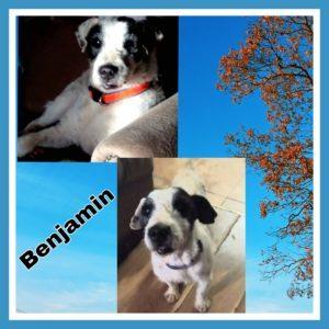 benjamin (2)