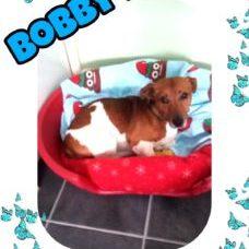 bobby-d
