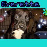 everette
