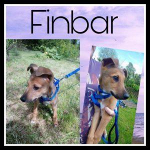 finbar_2